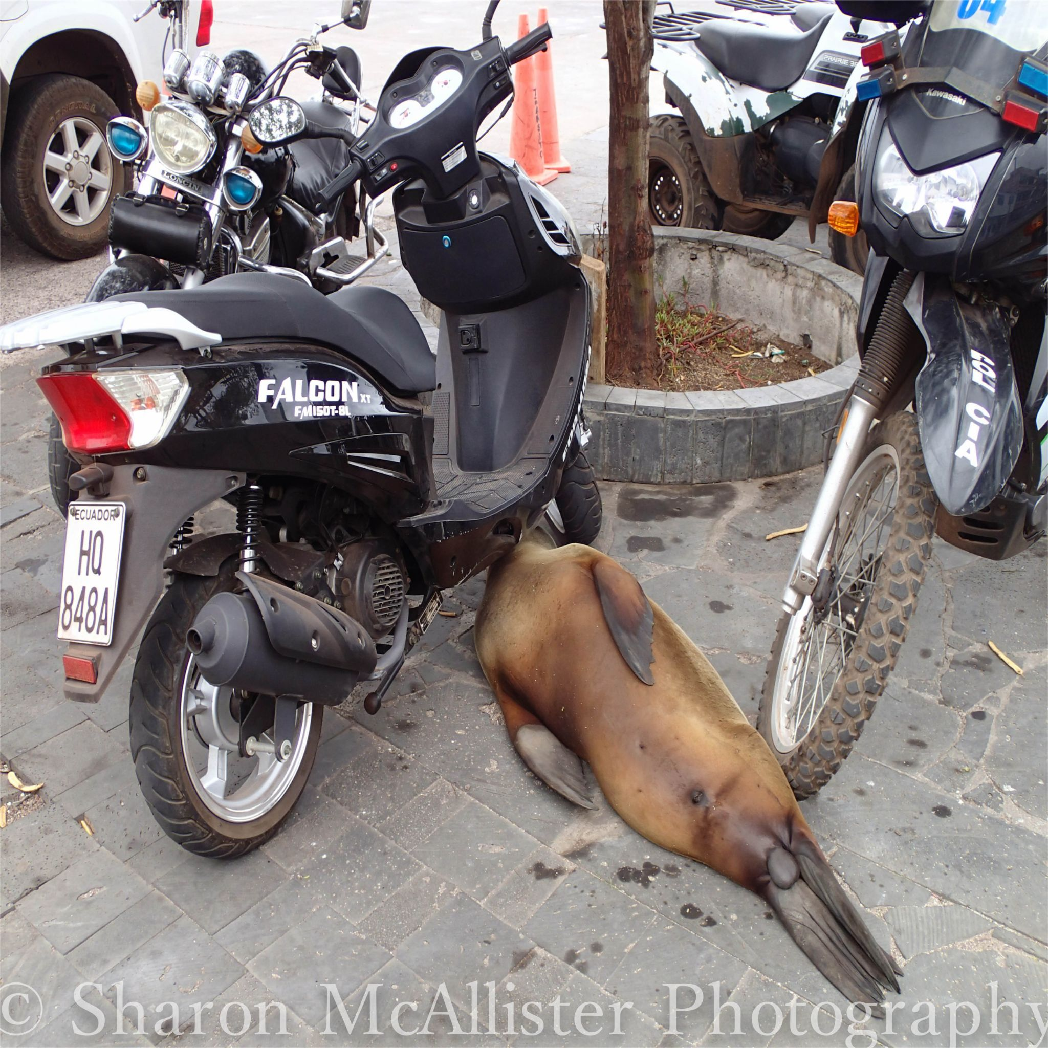 The local Mechanic in the Galapagos Isles by Sharon McAllister