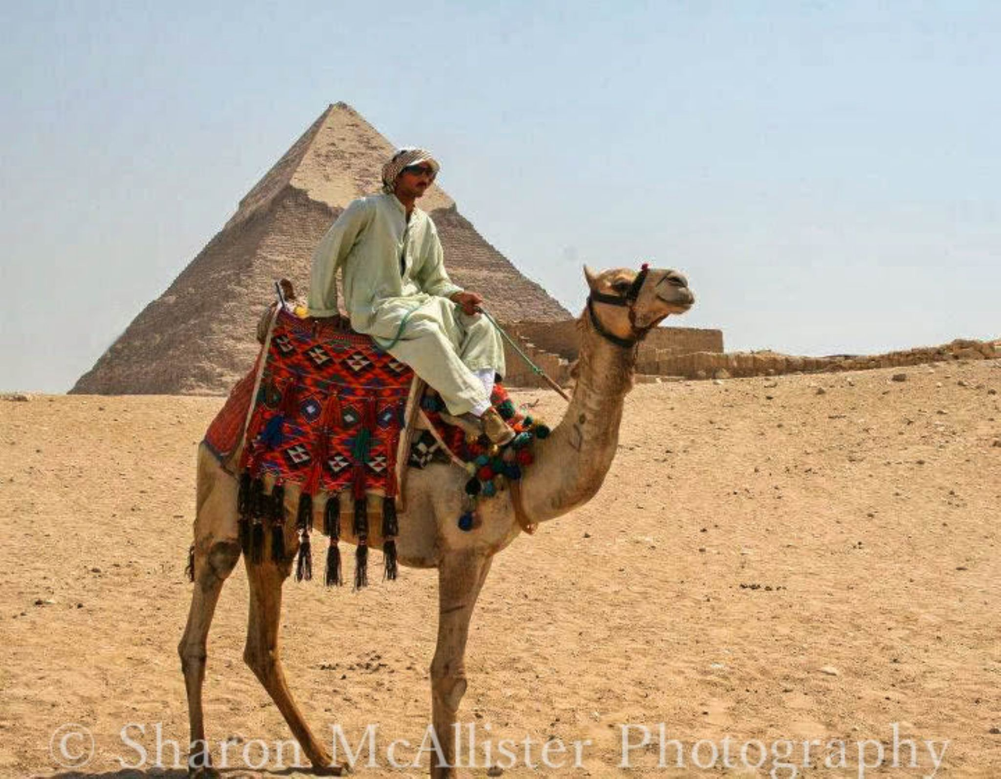 Bedouin man on his Camel at Egyptian Pyramid by Sharon McAllister