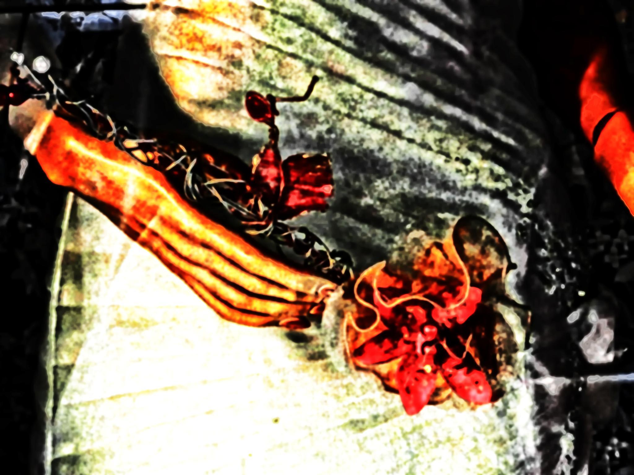 Untitled by sandra cid