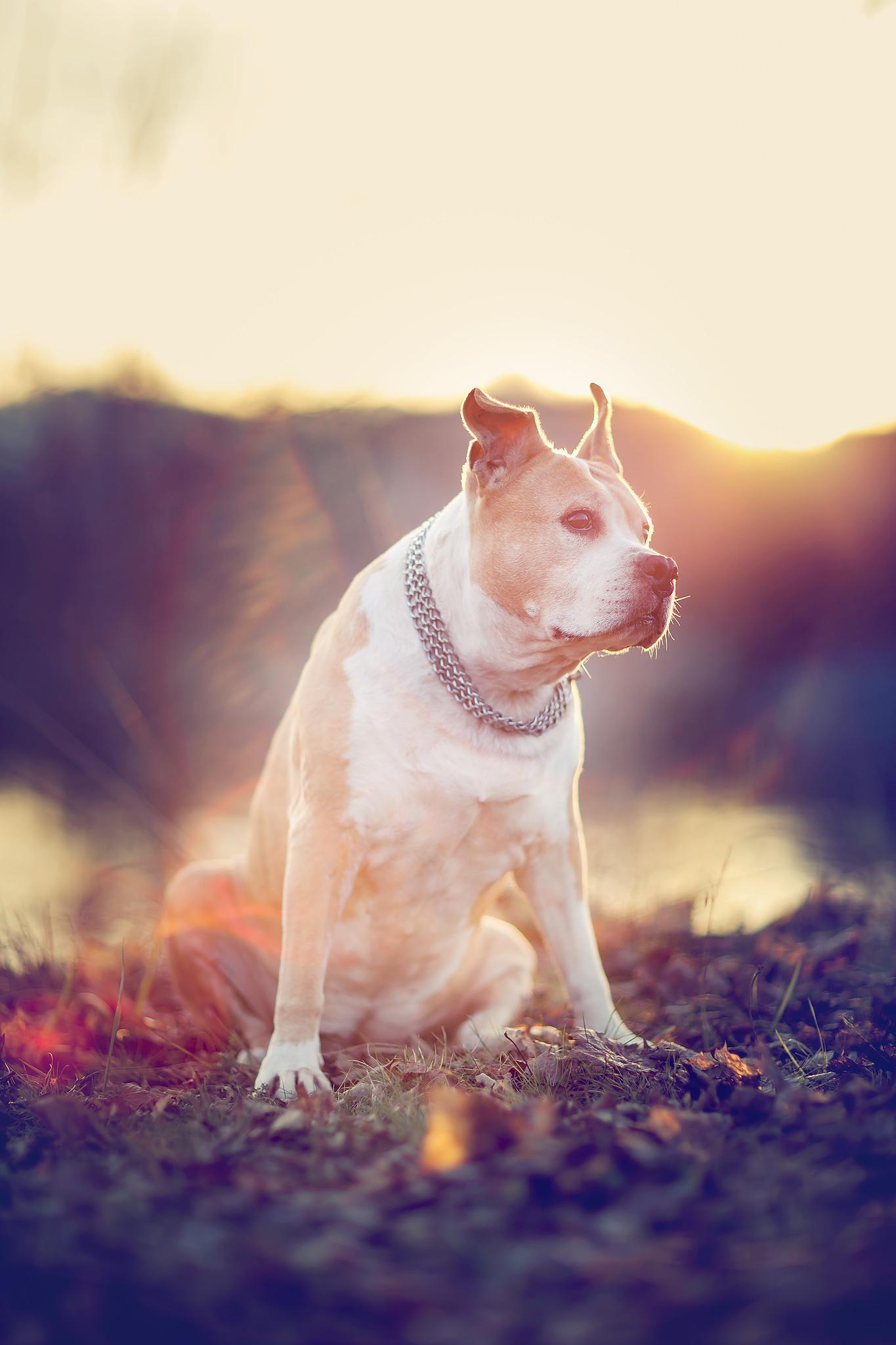Dezember Sun by dp photography