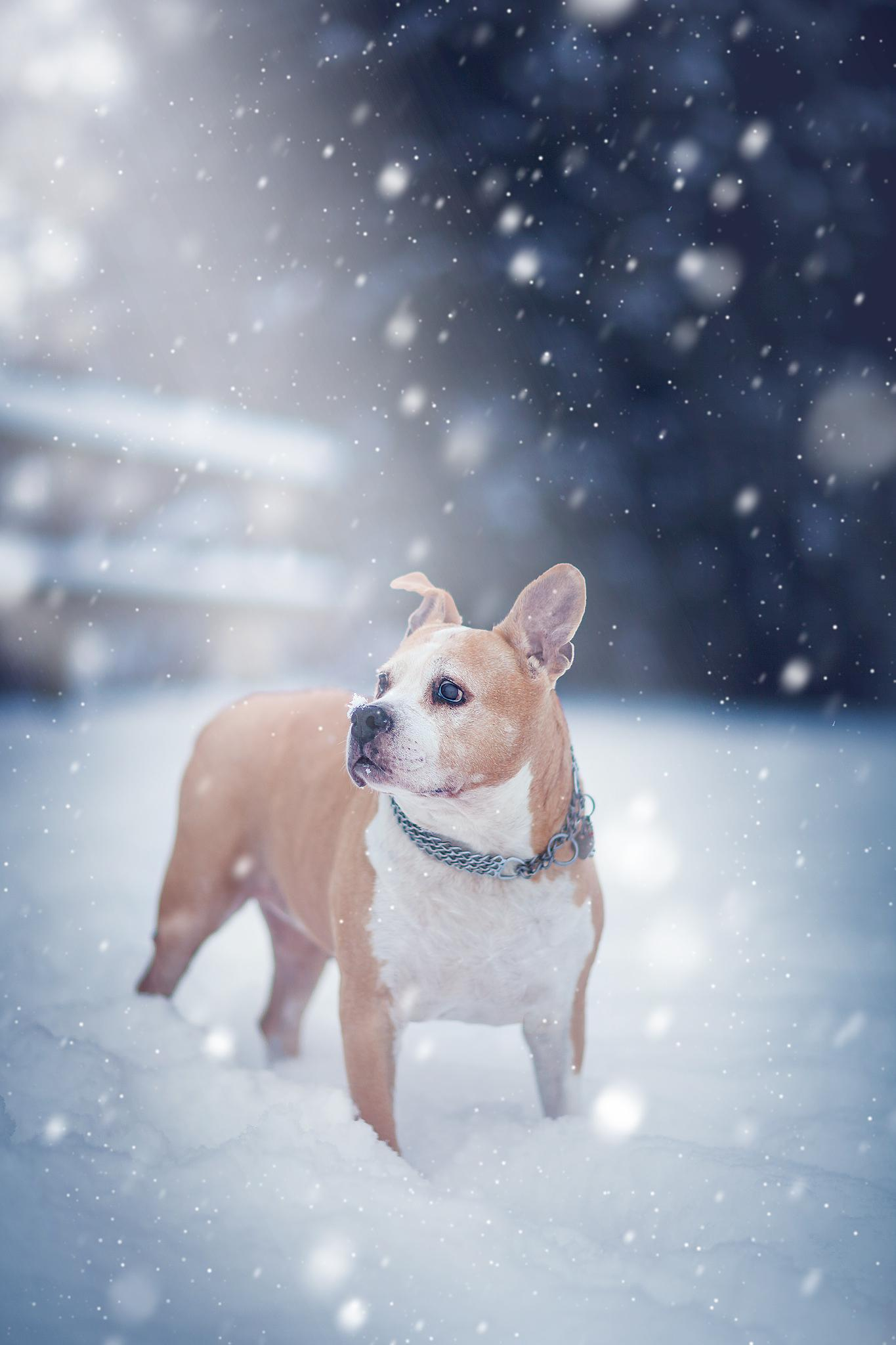 Schneefräsen by dp photography