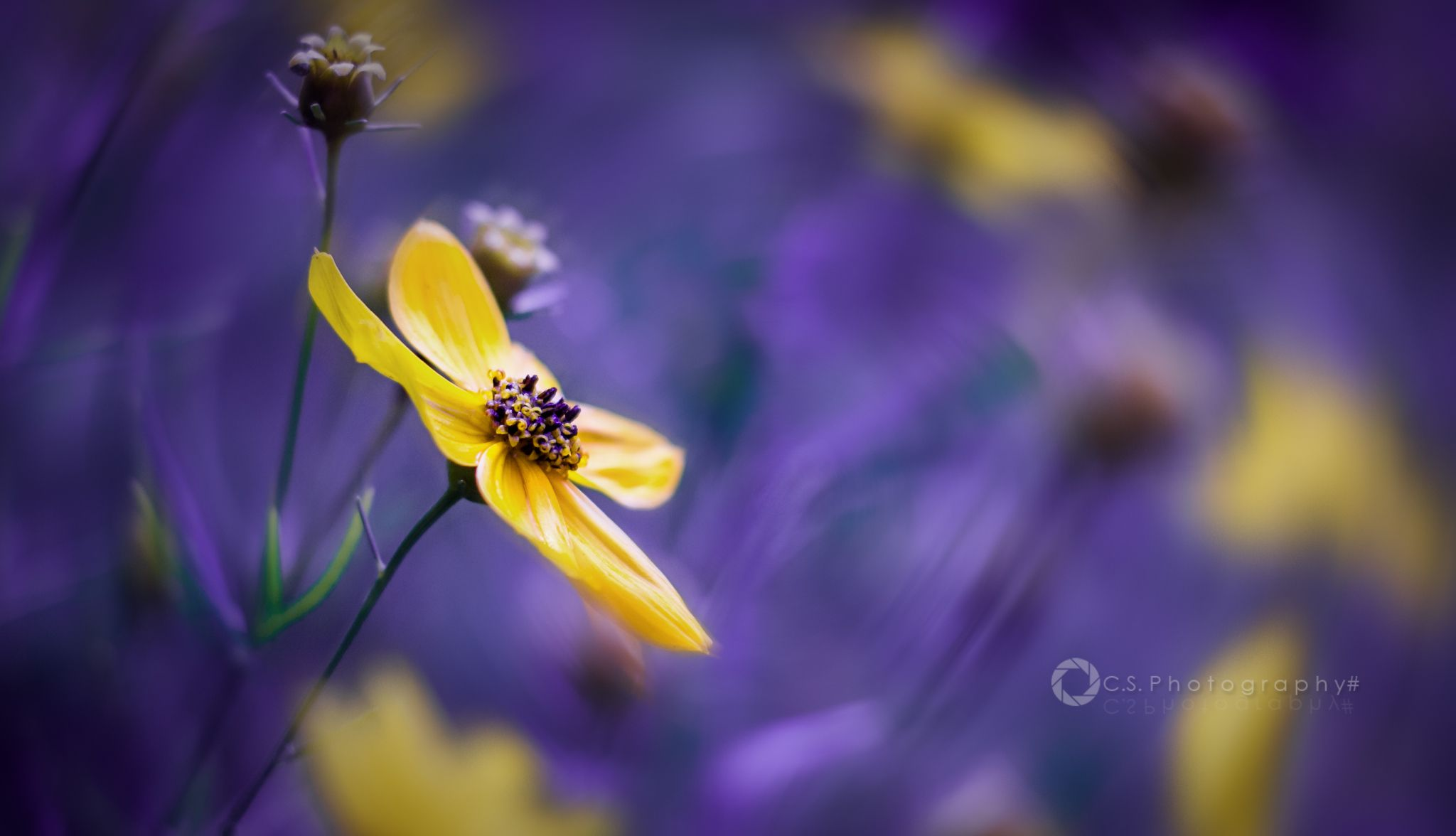 Twisted Flowerpower. by Chris S.
