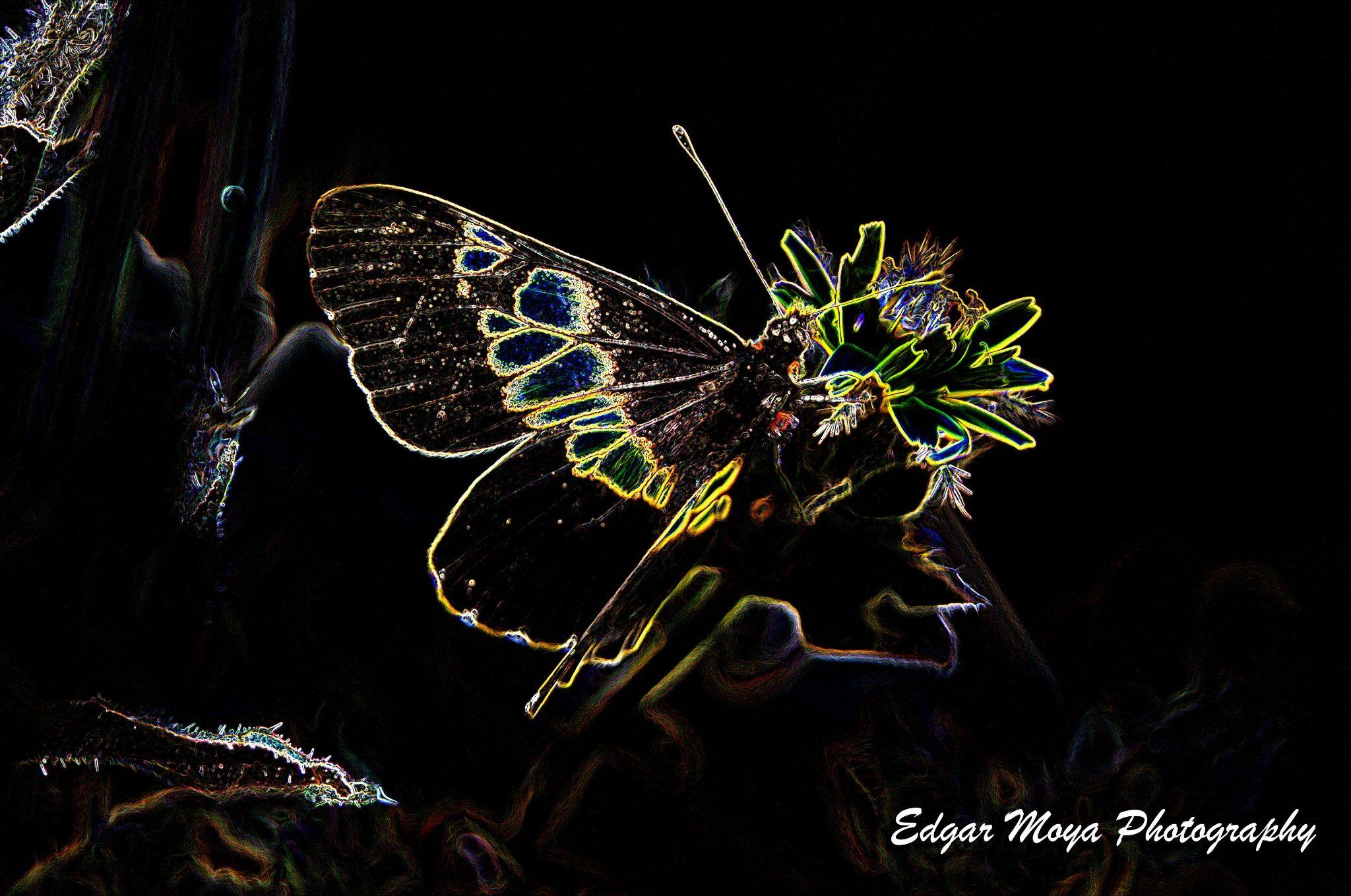 ART-TERFLY by Edgar Moya(FACEBOOK Filmaciones Avante)