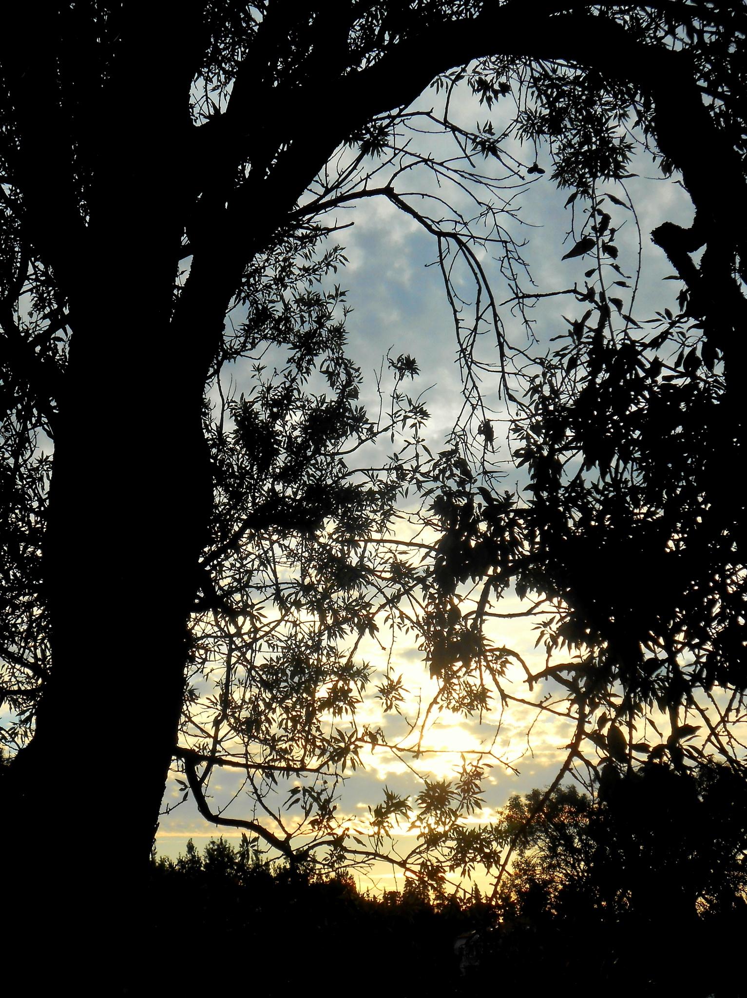 sunset by meritta.glasnovich