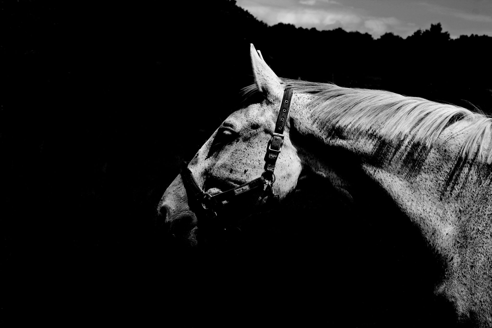 White horse with black spots. by Foxeya