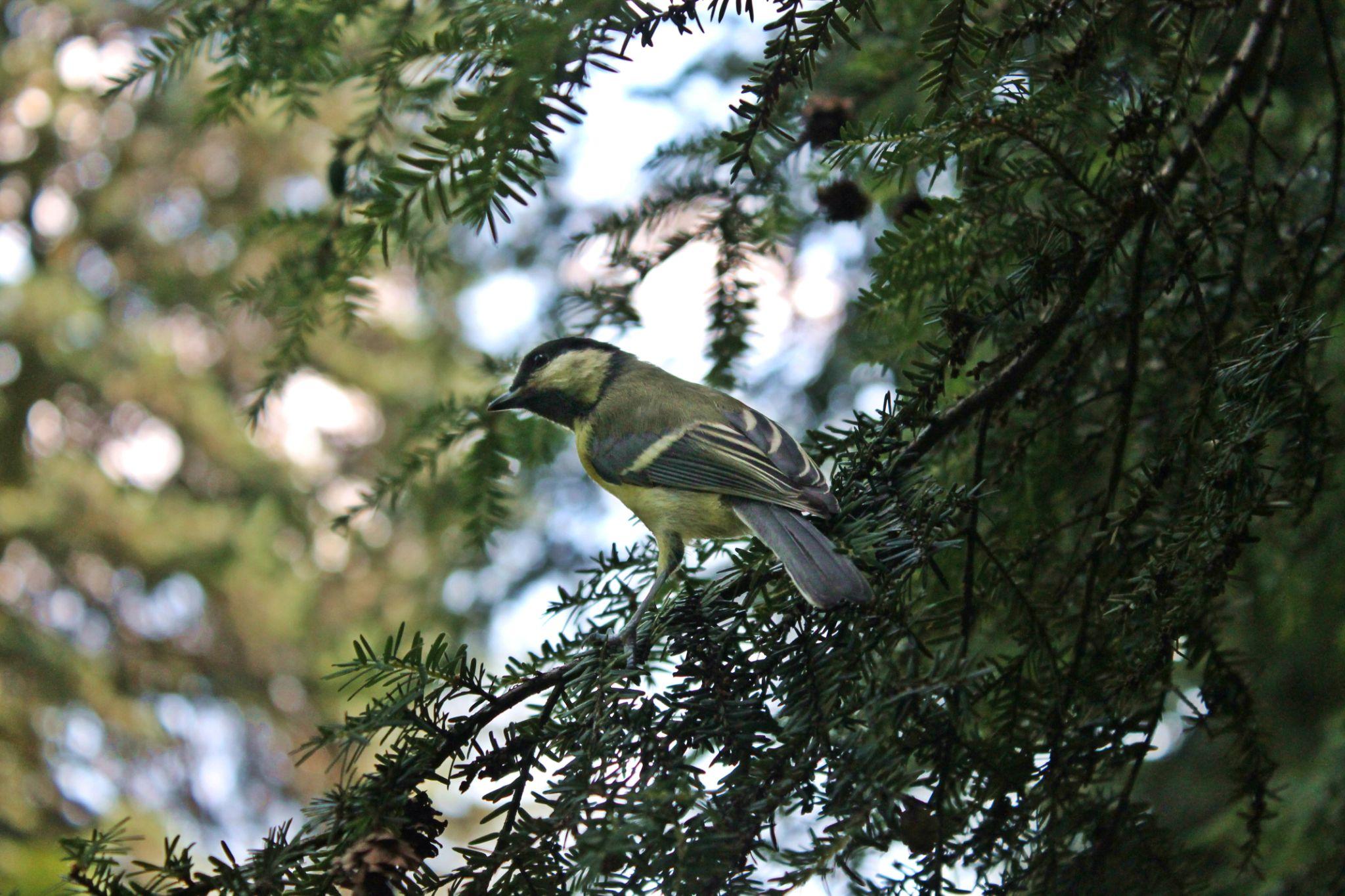 Bird. by Foxeya