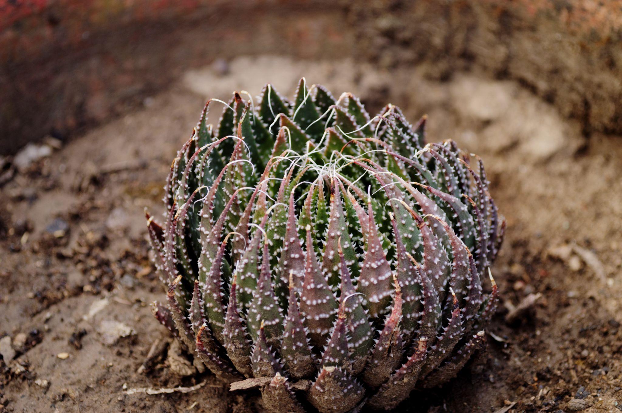 Plant by mrinalinilingwal