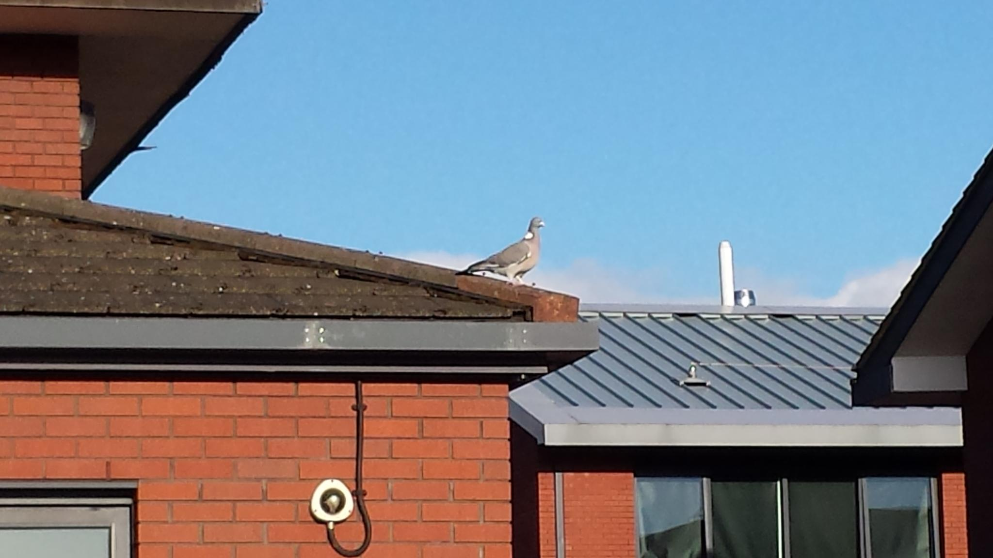 bird on roof top by joshua.f.baralasker