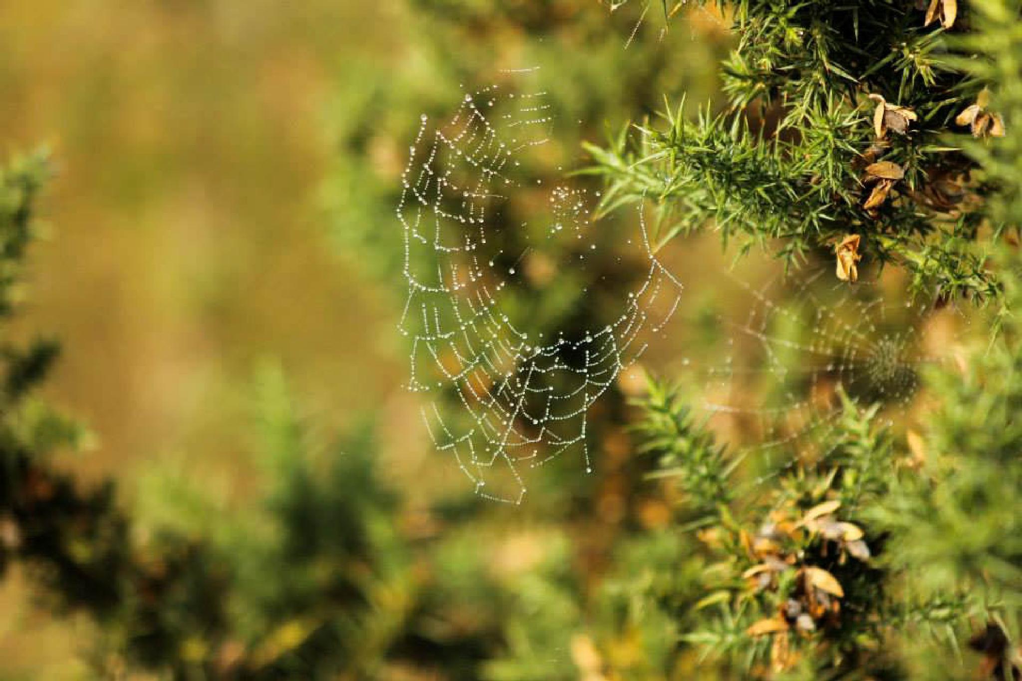 Spiderweb by donata.panczyk