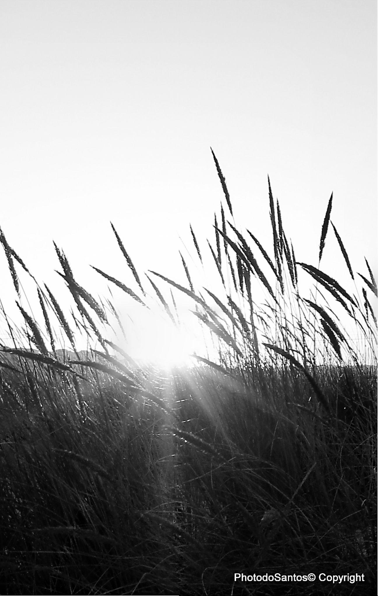 Wake up sun by Ricardo Santos
