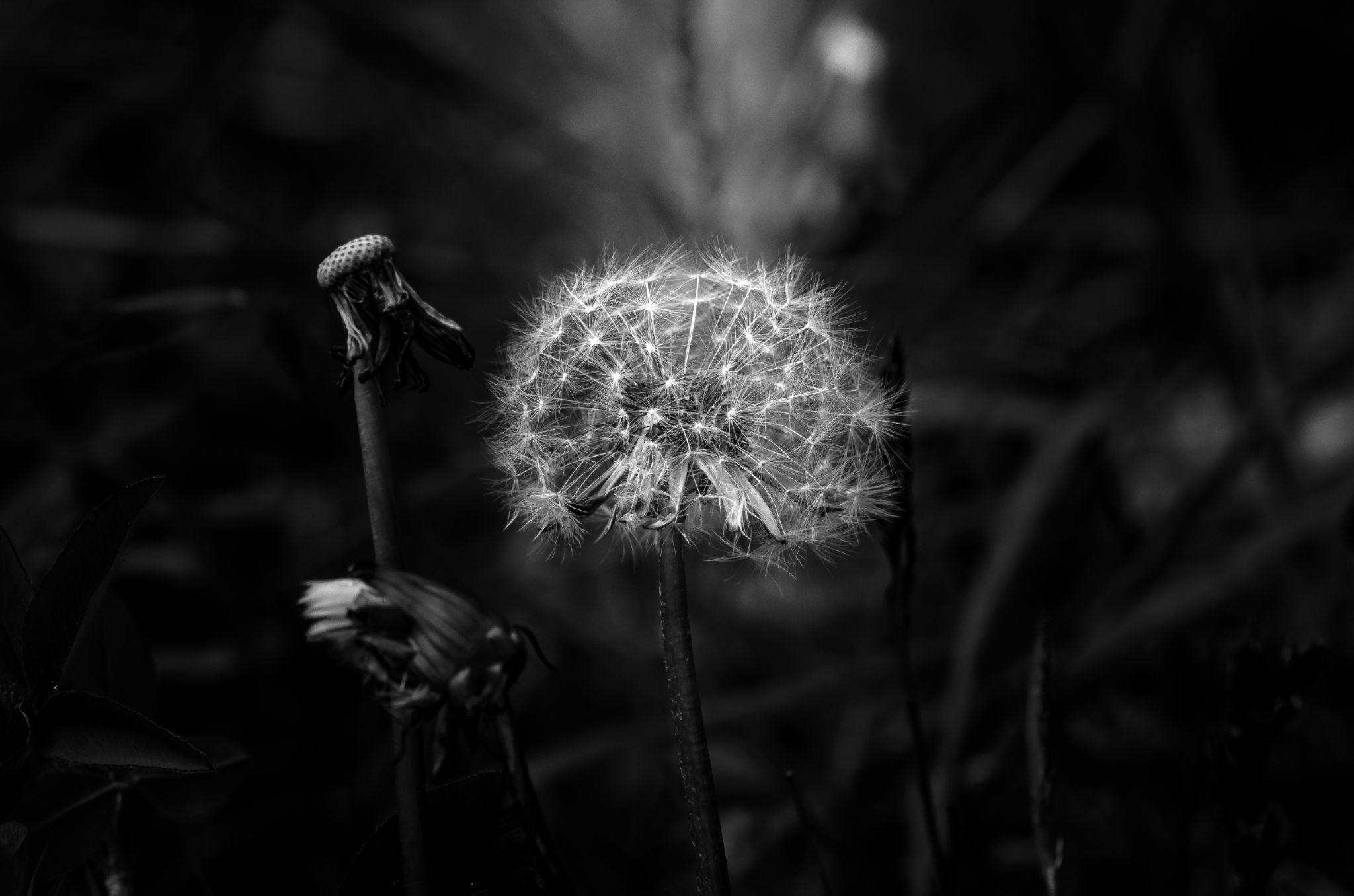 The Flower by royfriskilae