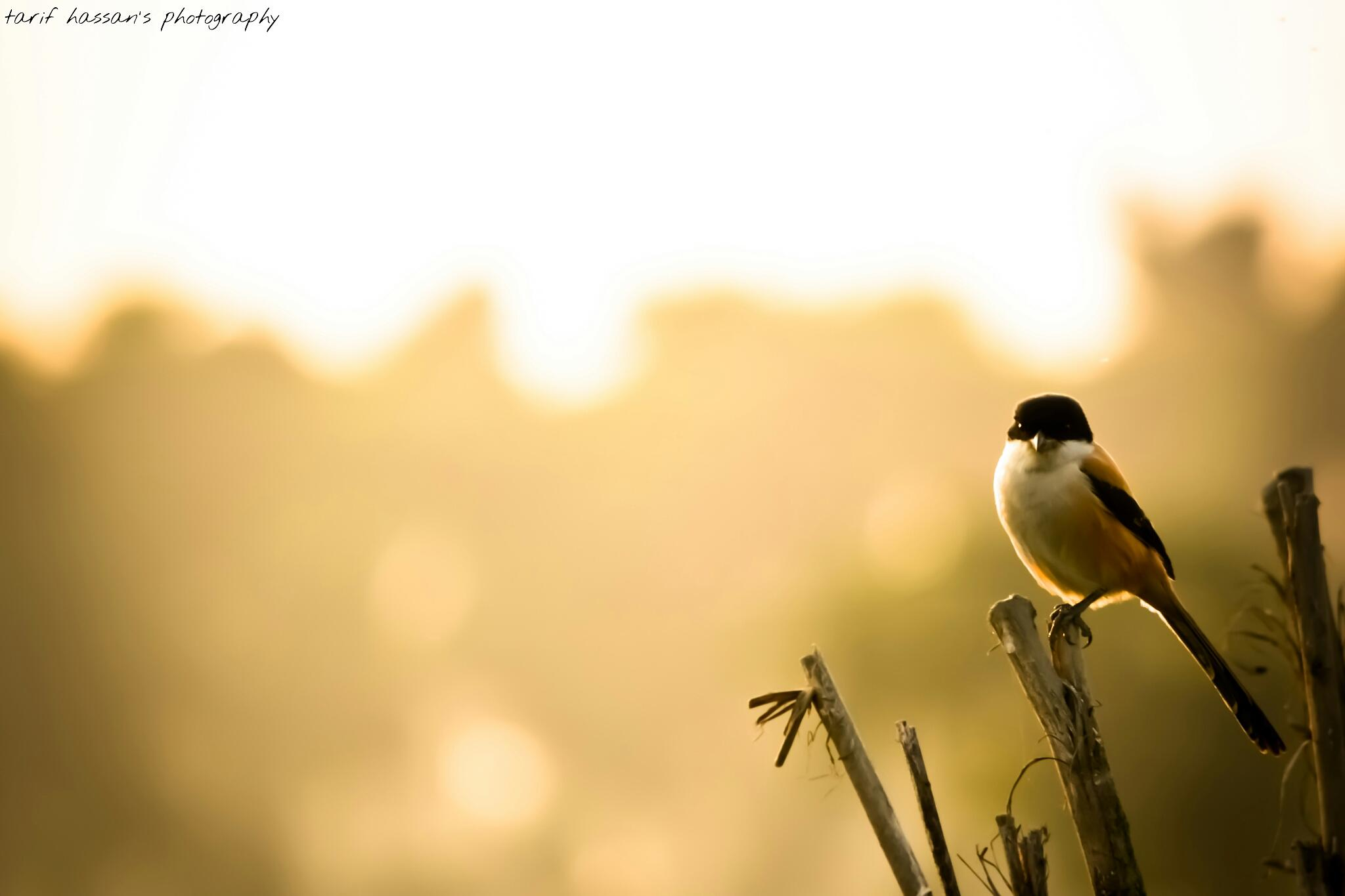 bird sets on branch by tarif.hassan.96