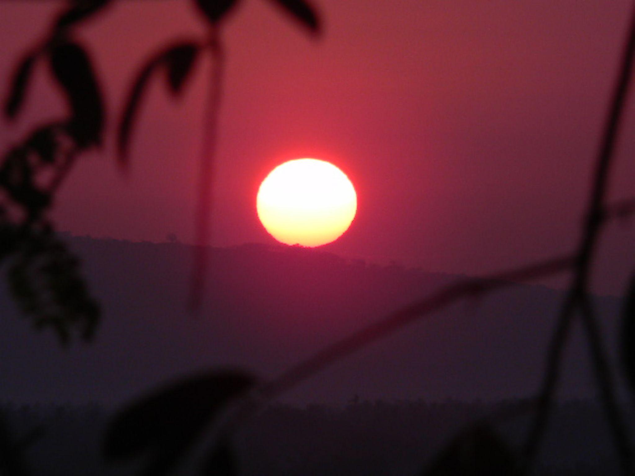 Sunshine  by Venusphotography