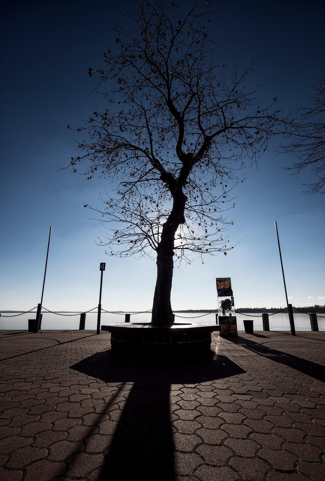 tree 2 by Sevoir
