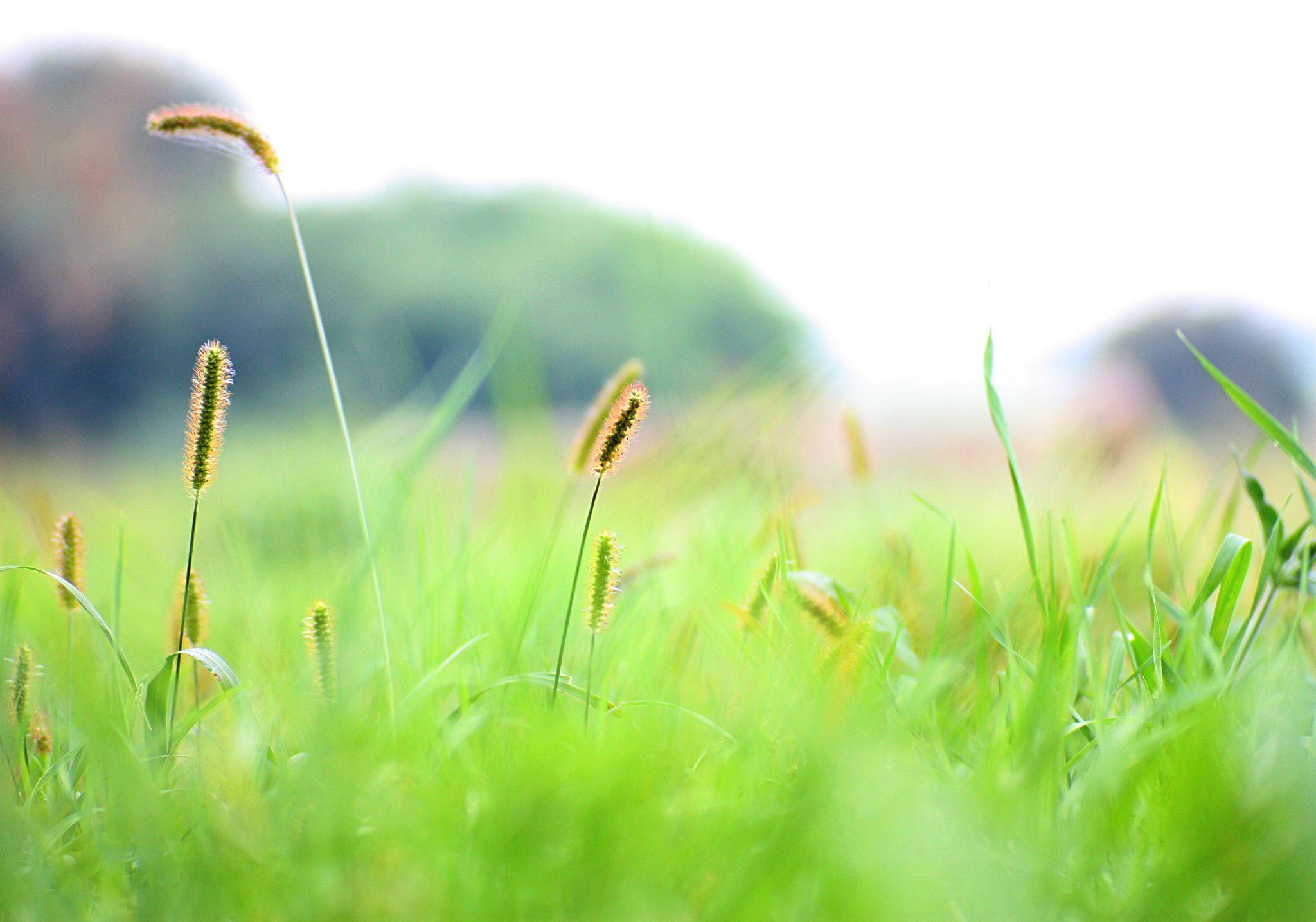 grass by Sevoir