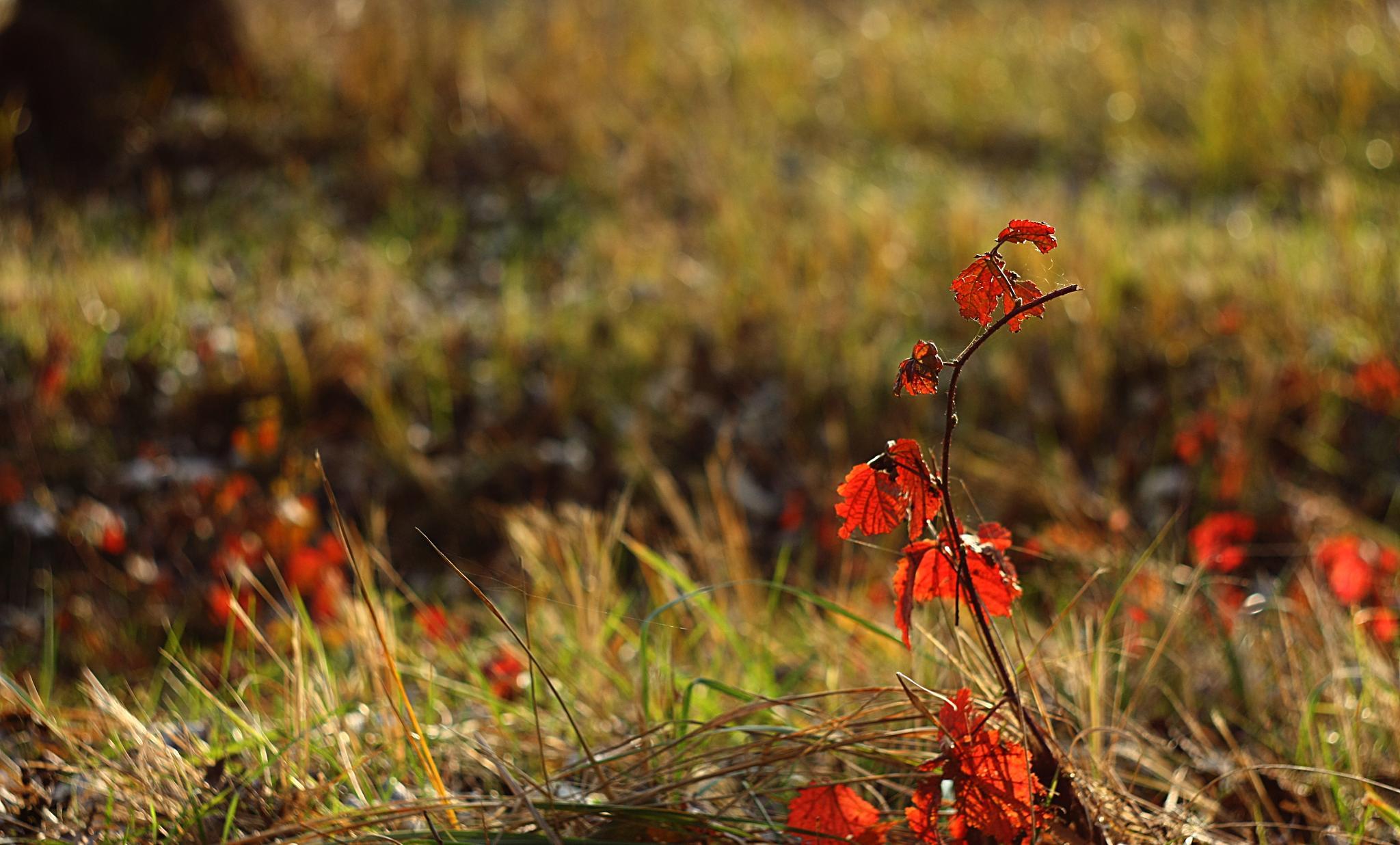 autumn by Sevoir
