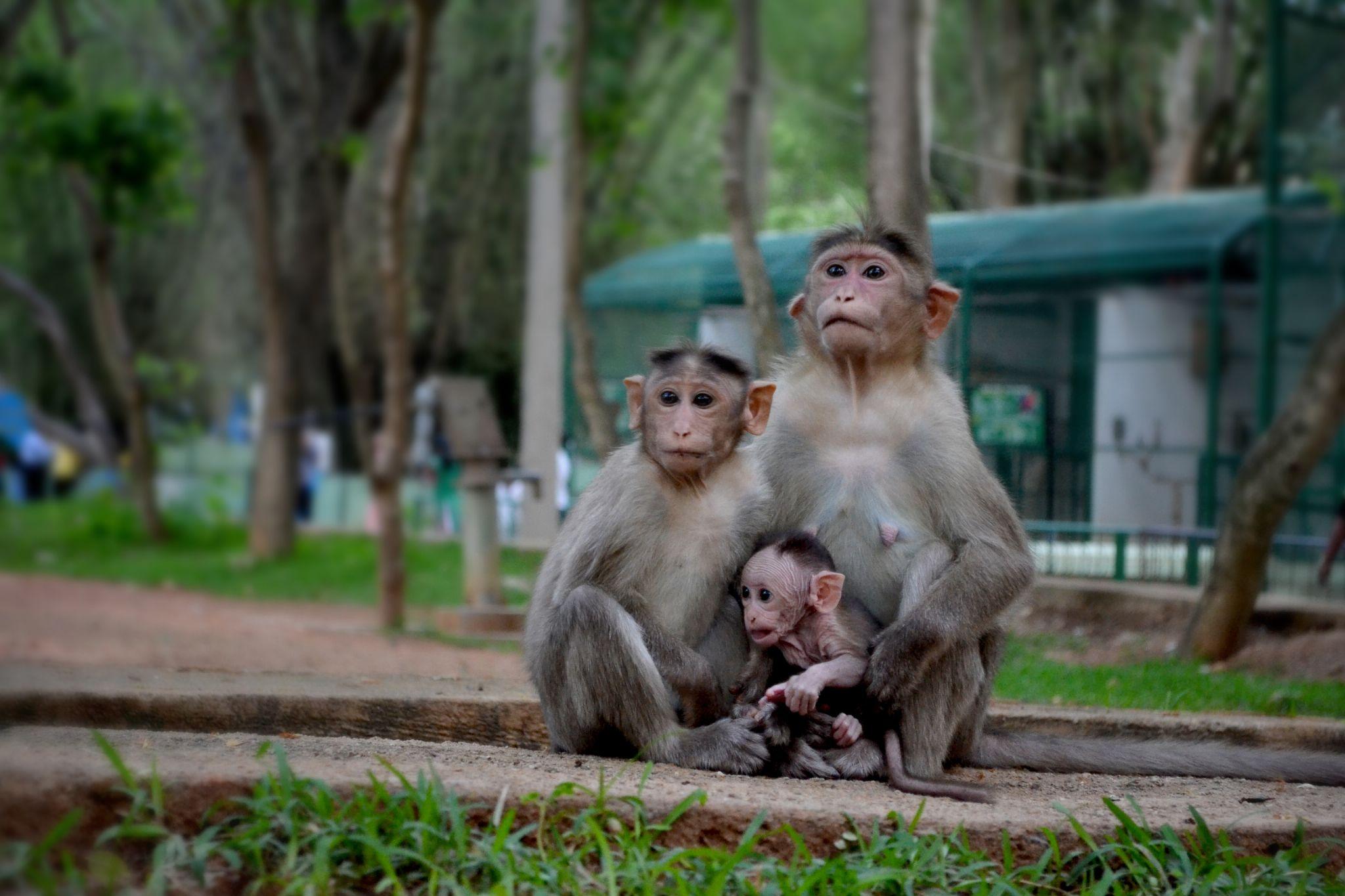 Zoo  by saran.tm.50