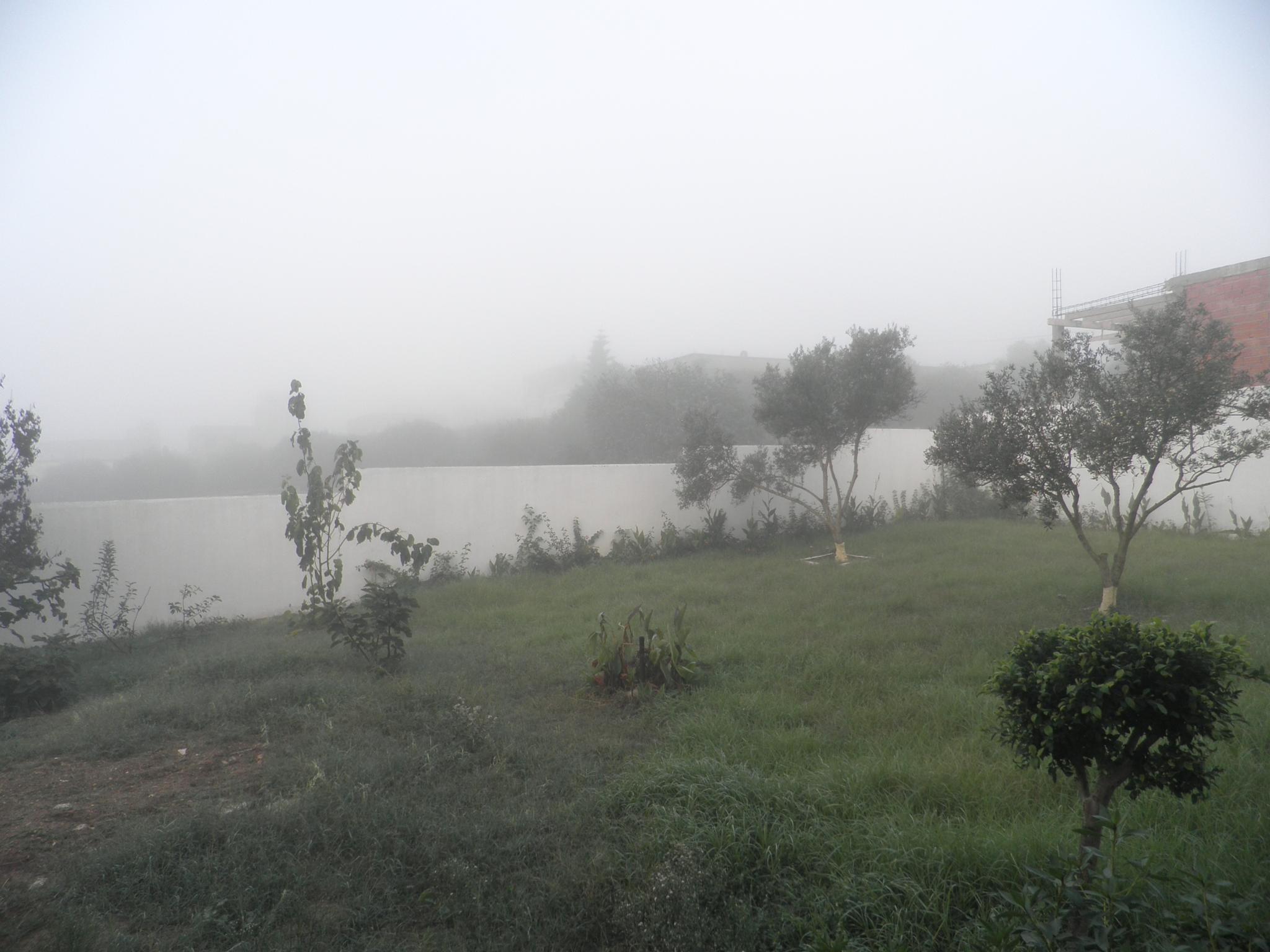 foggy morning by Hiba Sghaier