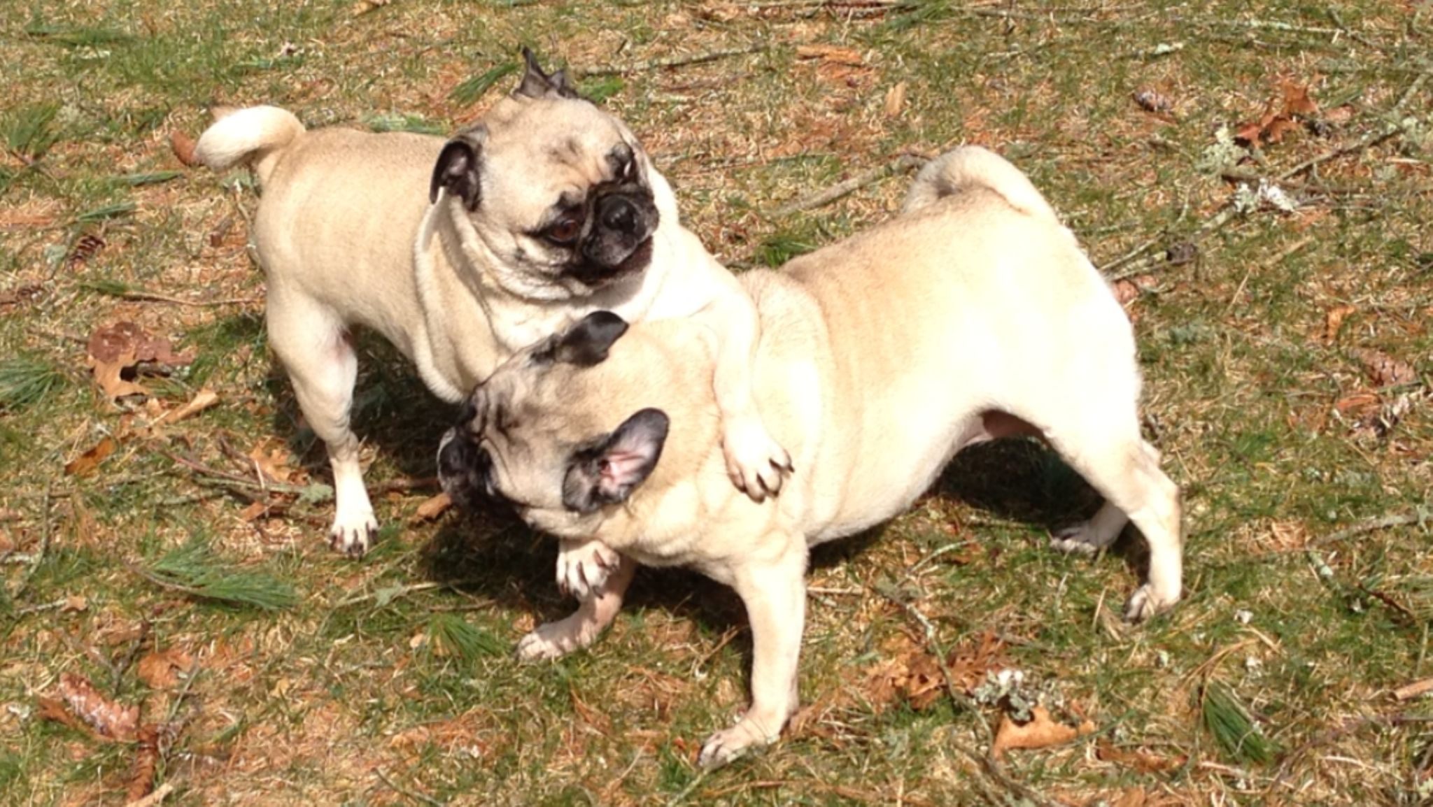 Thelma and Louise and Their Sisterly Love by Lillie Marie