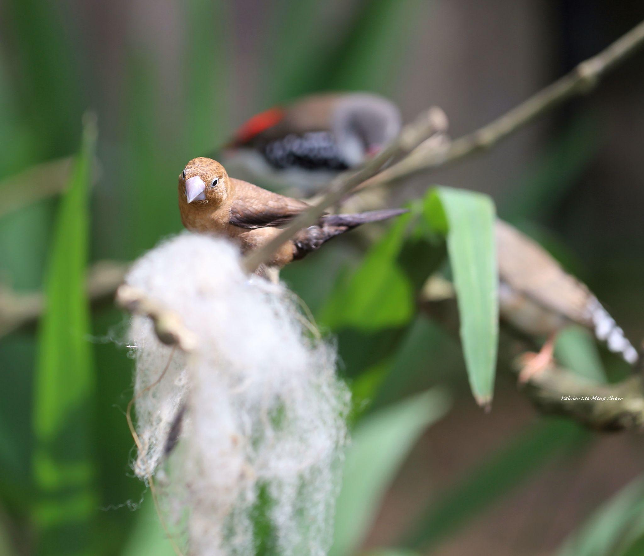 Bird 5 by Kelvin Lee