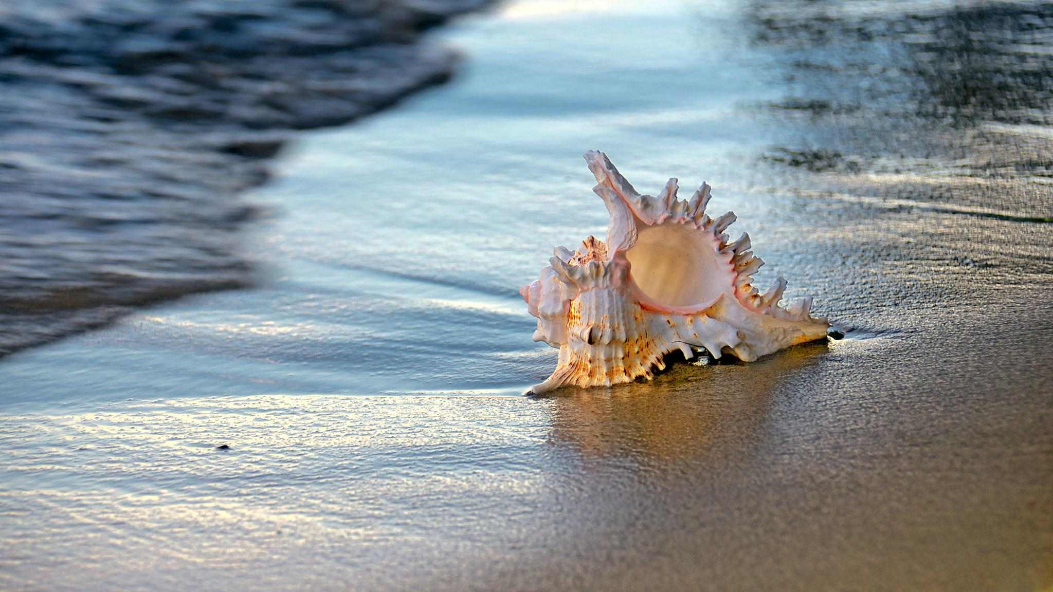 Shell by Eduard Gorobets