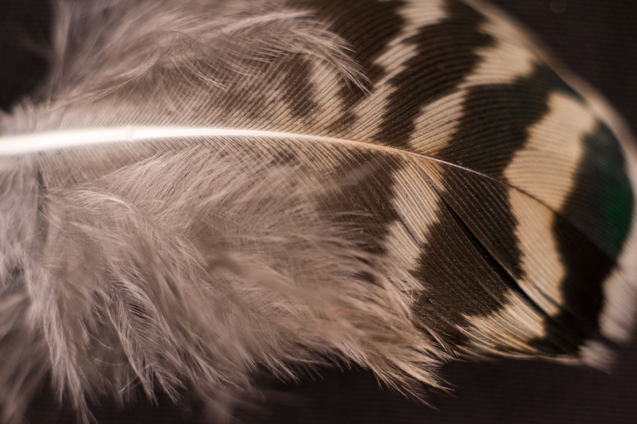 feather/// by mardelrio