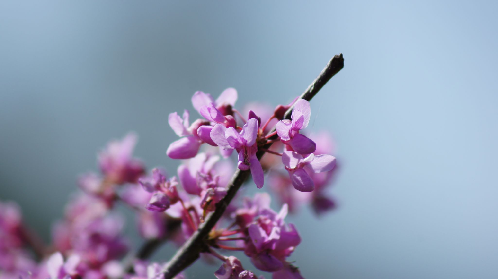 Flower by AudaxPhotography