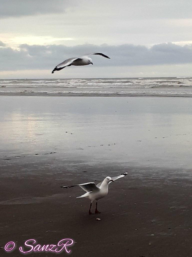 Seagulls by sanz r