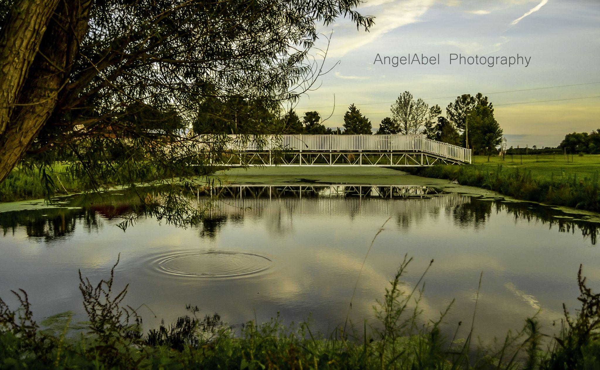 www.facebook.com/AngelAbelPhotography by AngelAbelPhotography