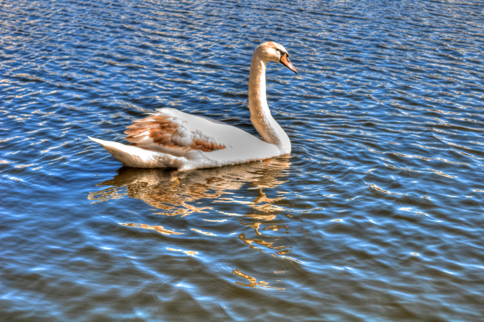 the swan lake by jean