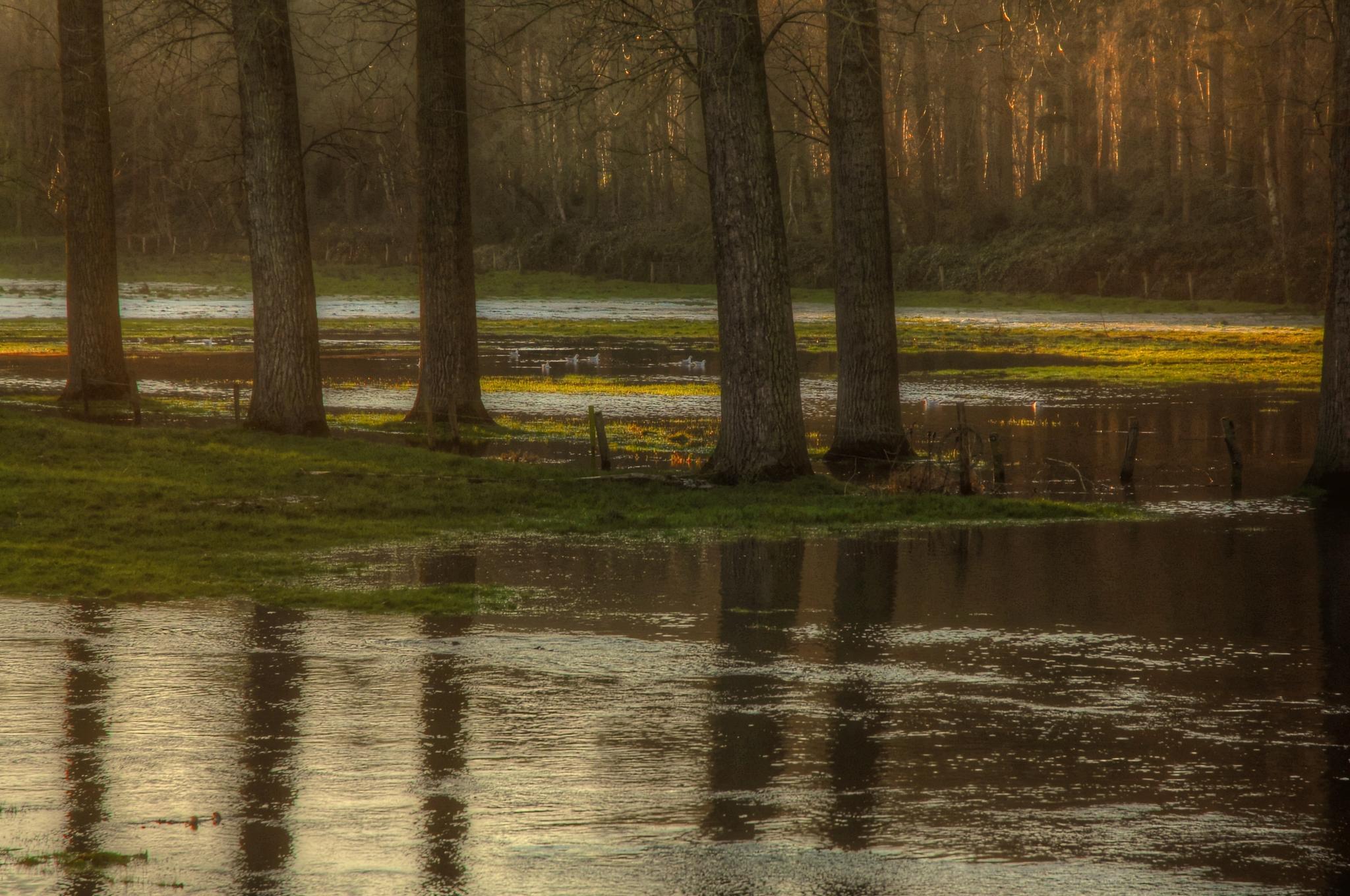 a lake that is not a lake by jean