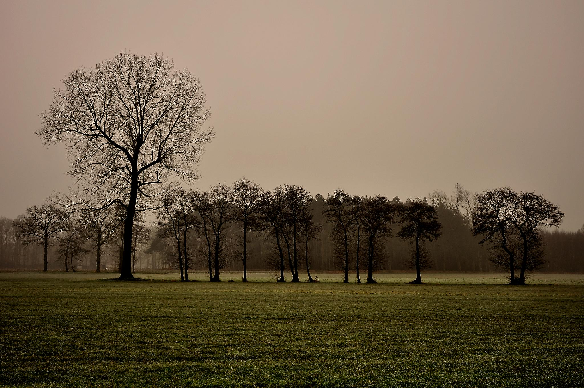 and i 've got trees in the morning by jean