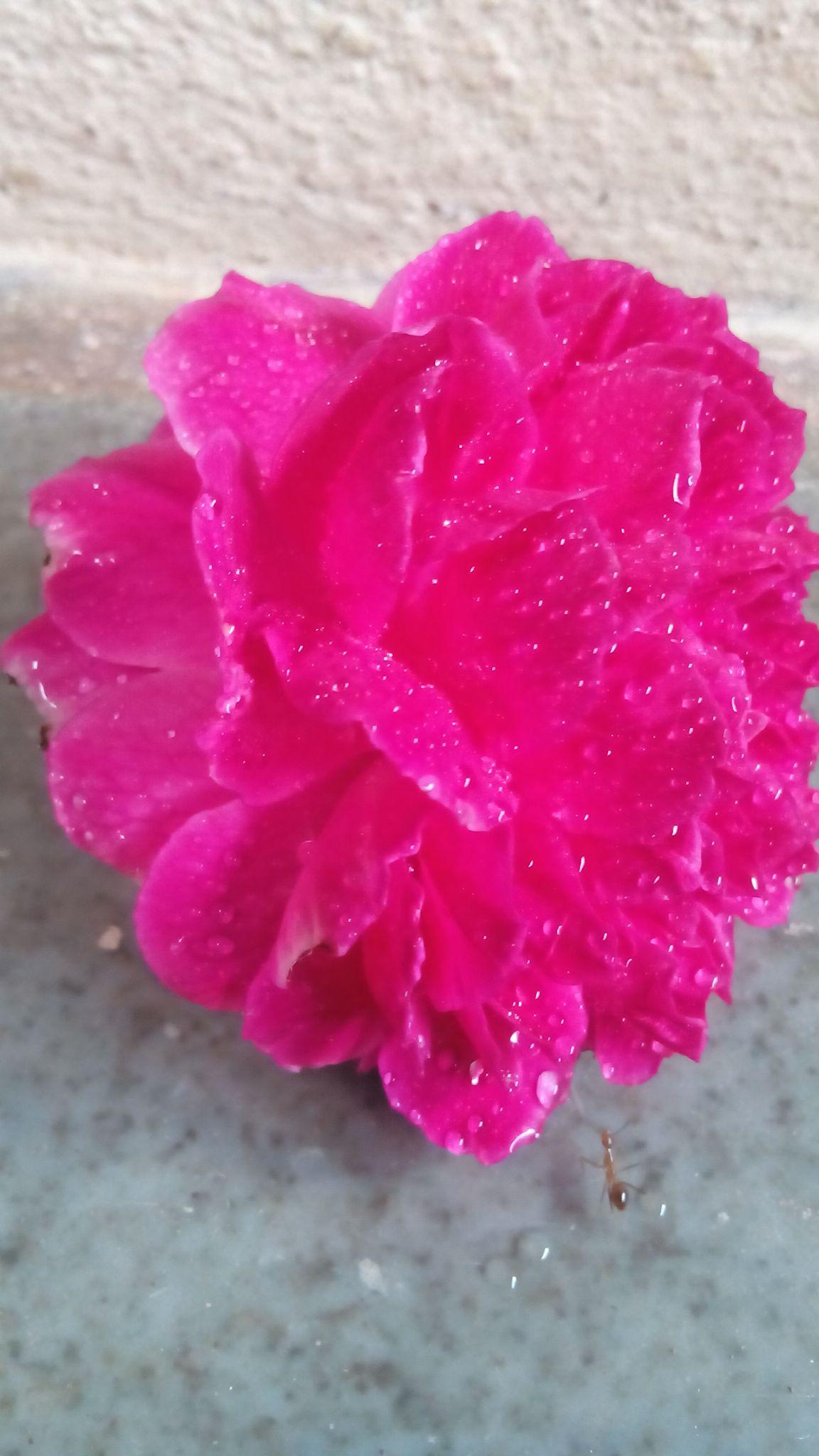 flower & ant... by omkar gurav