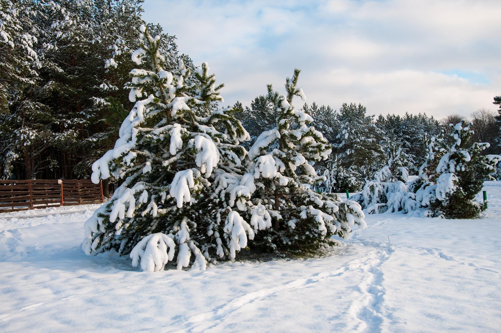 Early winter by Irena Gedgaudiene