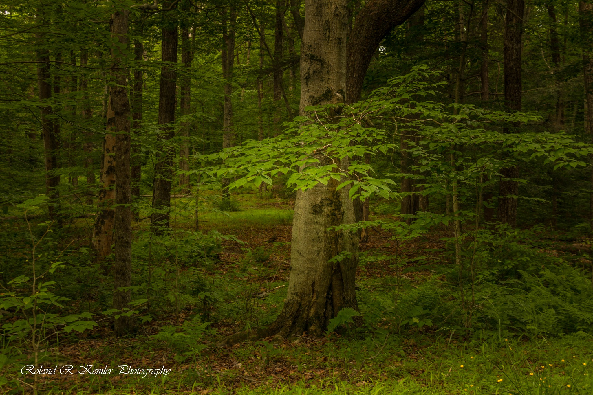 The Spiritial Forest by Roland R Kemler