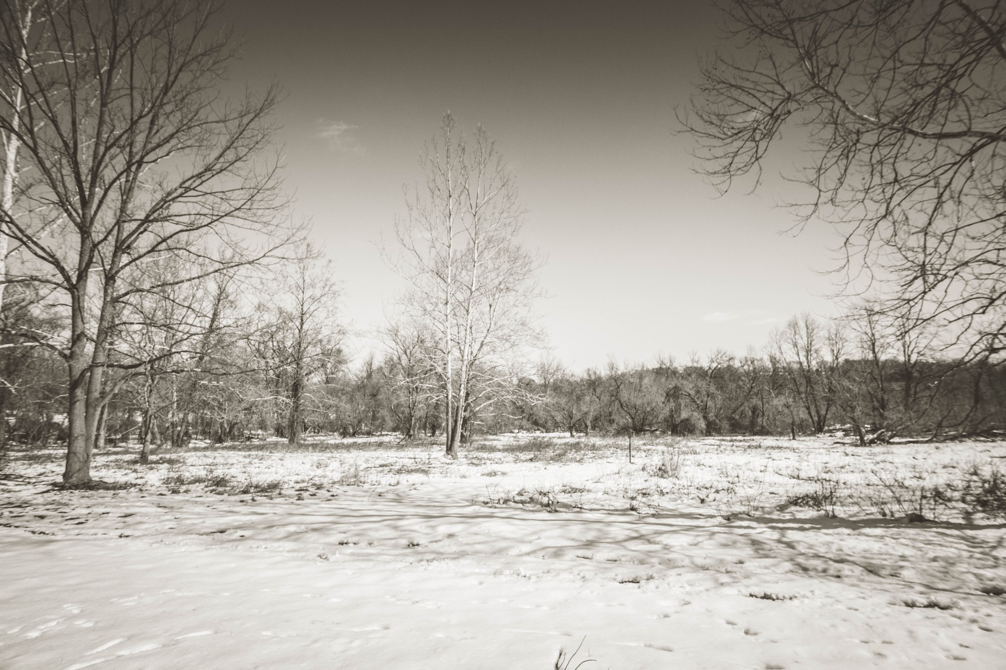 Tyler State Park in B&W .  by Roland R Kemler