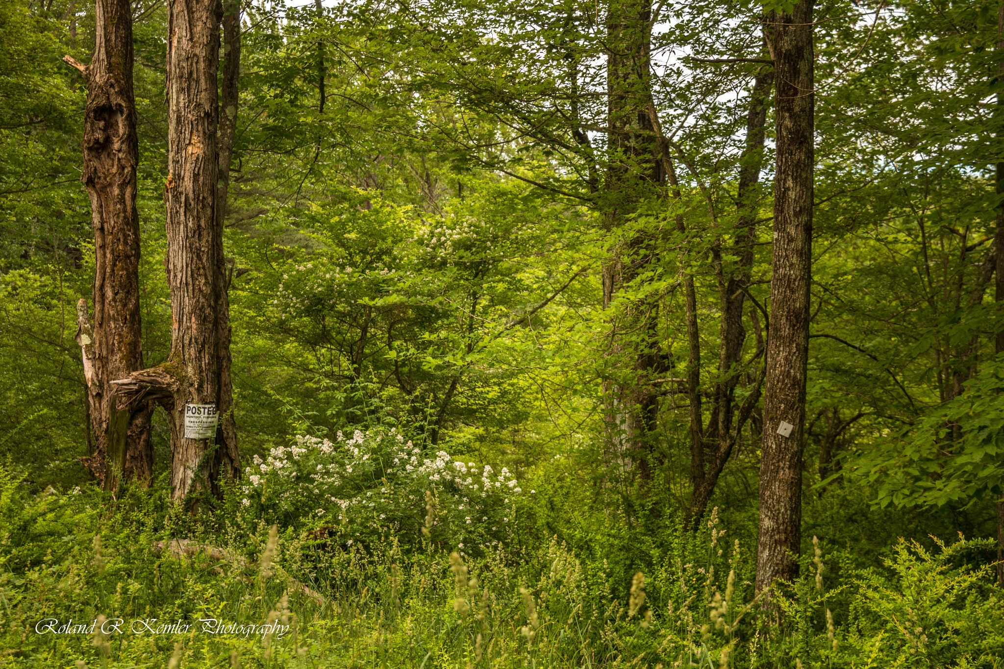 Into the forest I go! by Roland R Kemler