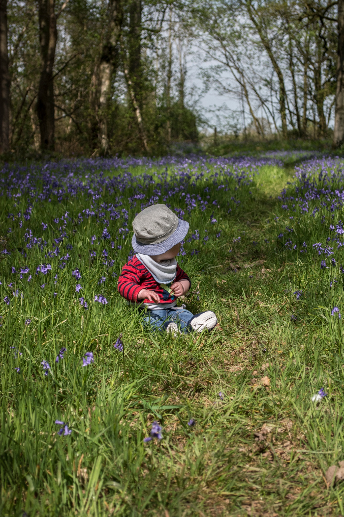 Photo in Nature #wood #robin #woods #blue #bell #bluebell #bluebells #son #boy #family #nature #natural