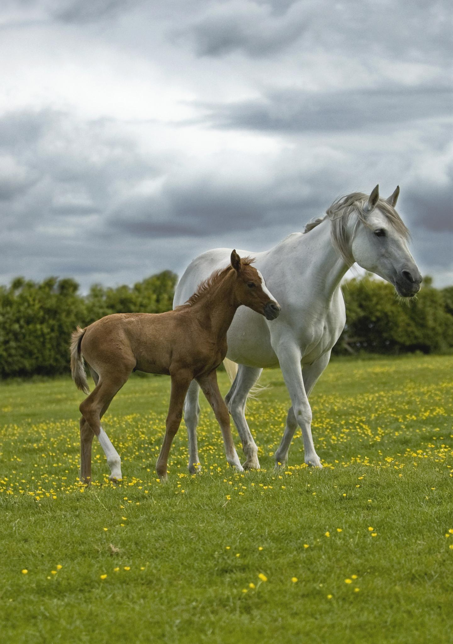 Mare and Foal by lauravphotography