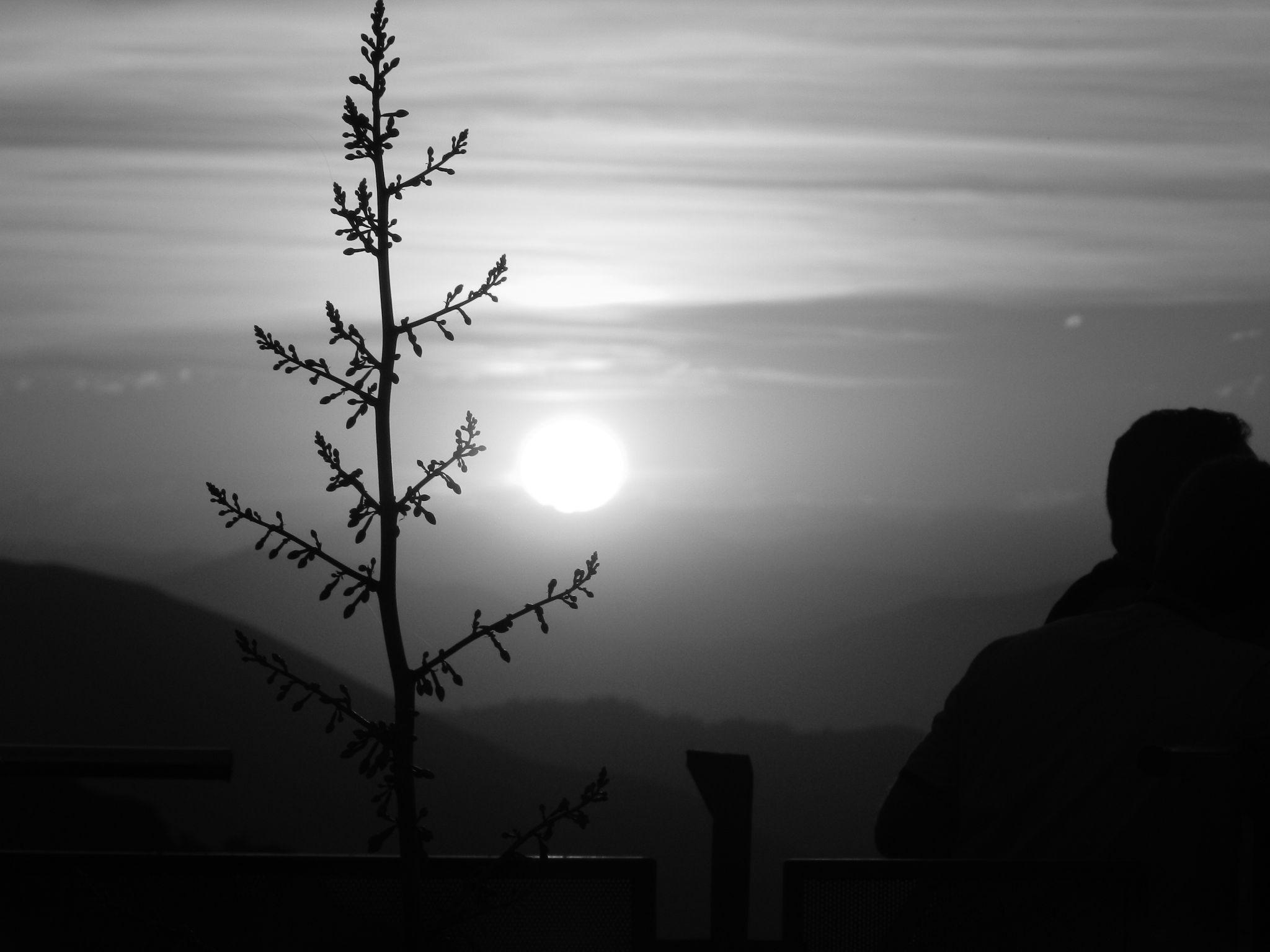 Sunset - Rio de Janeiro by Rogerio Carvalhal
