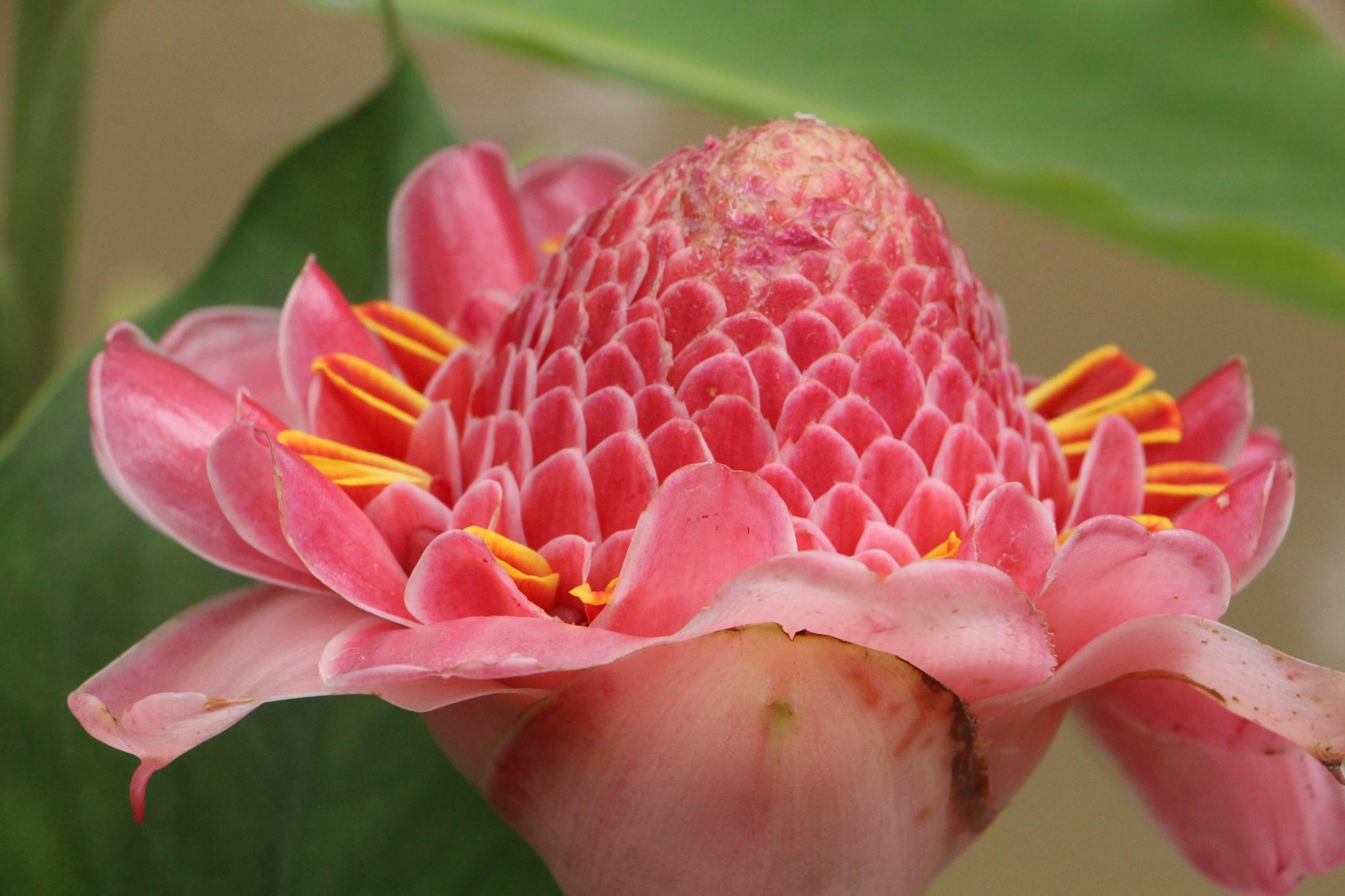 Flower by Shahed Syed Ashraf