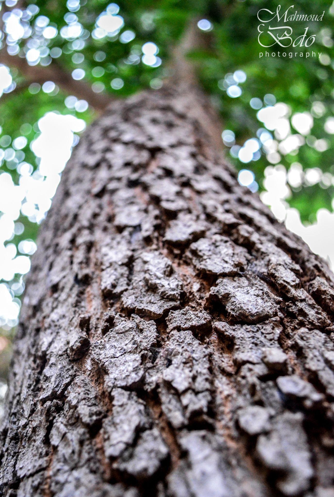 tree by mahmoud.abdo.7545708