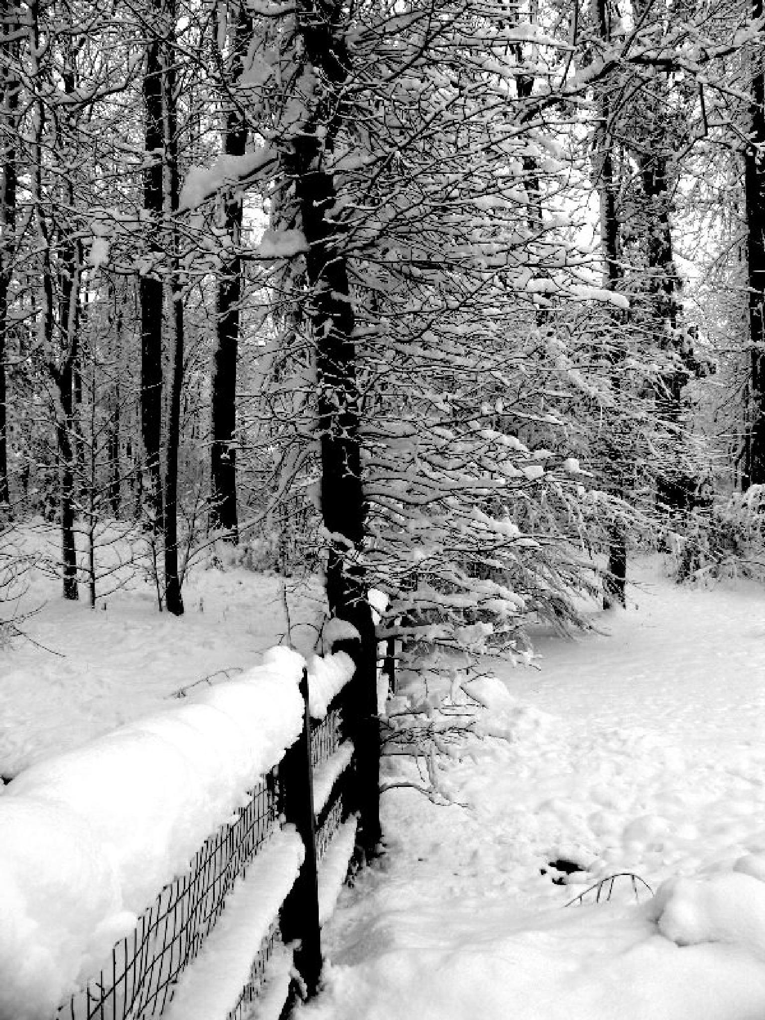 more snow by Tina Falkenbury
