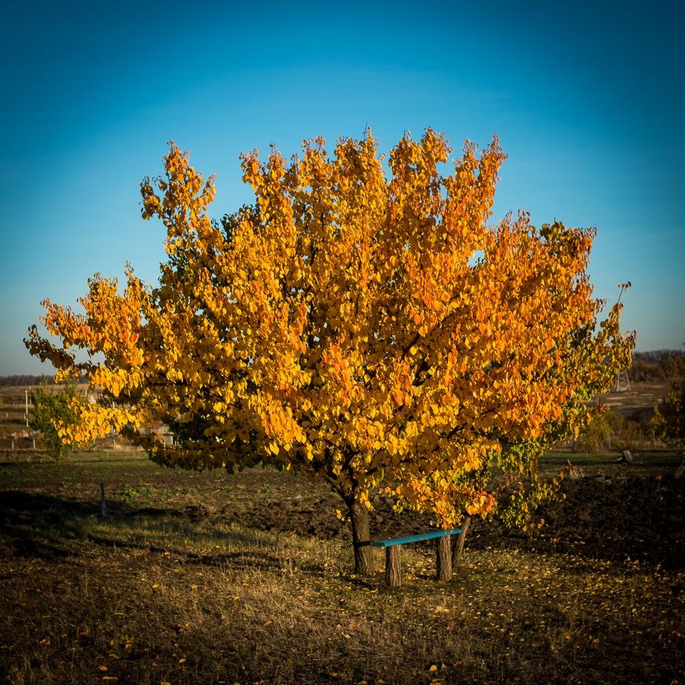 Autumn Tree by Ruslan