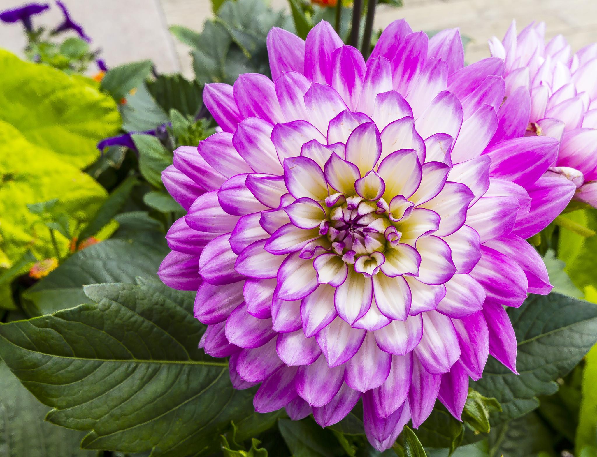 Purple Beauty by Joe Chrvala