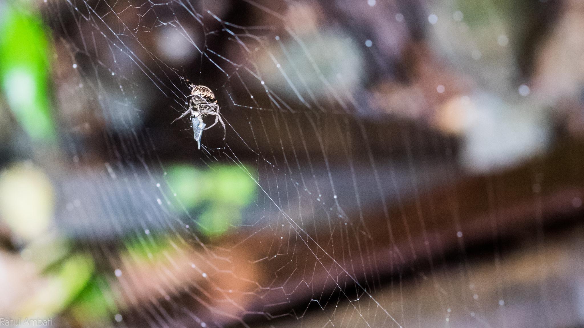 Sticky Web by Rahul Ambati