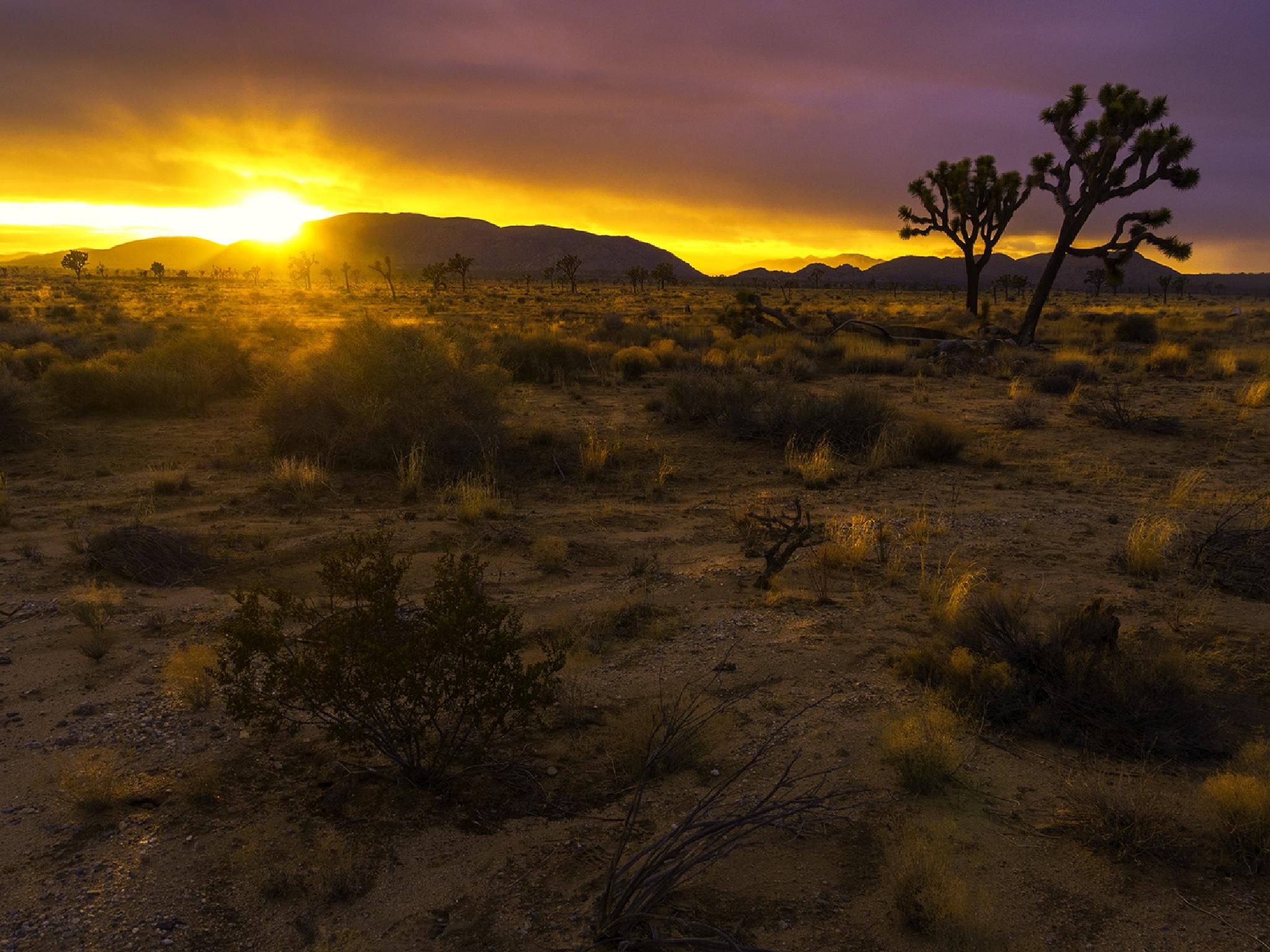 Joshua Tree National Park California by Jaime O. Frias