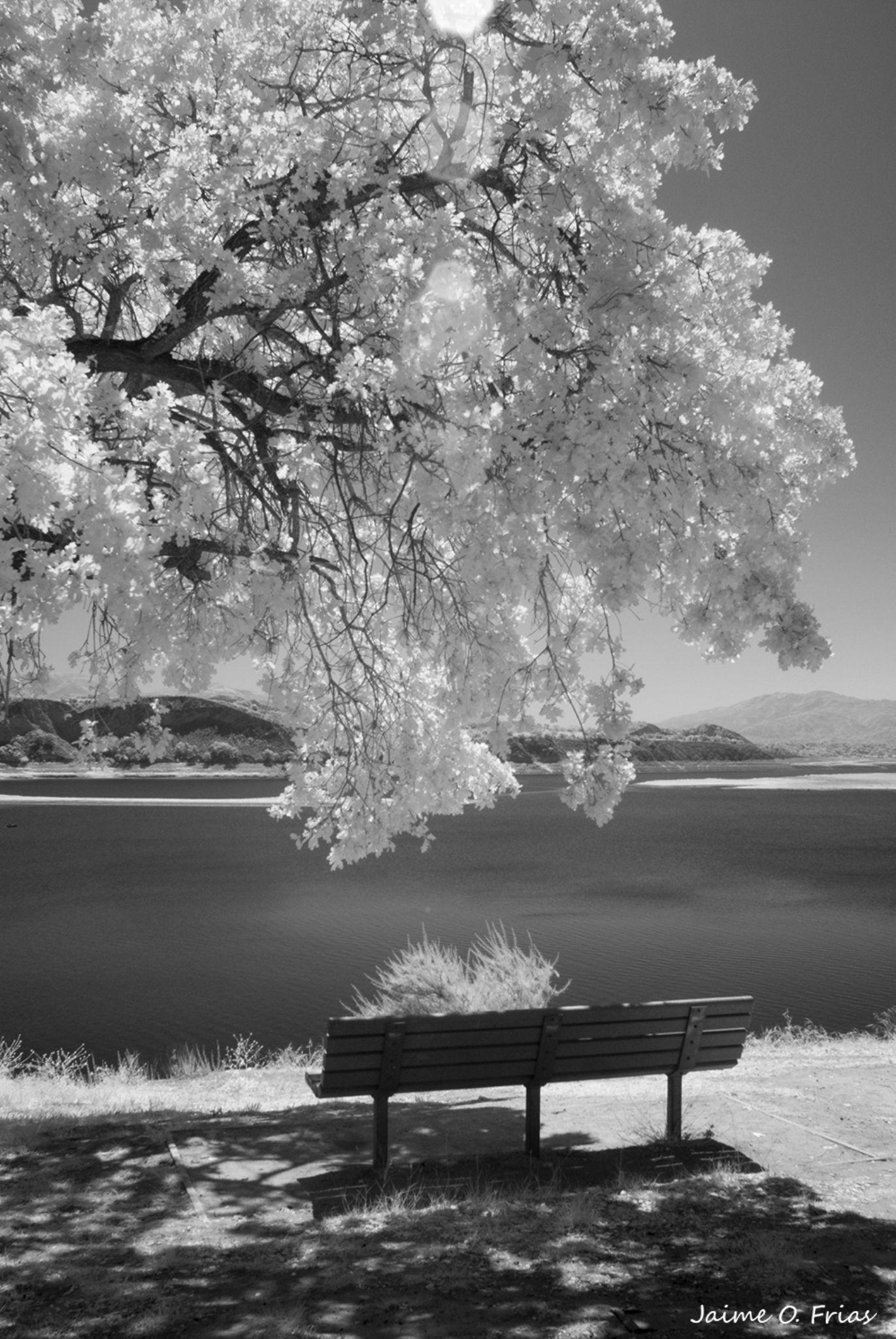 Infrared Lake by Jaime O. Frias