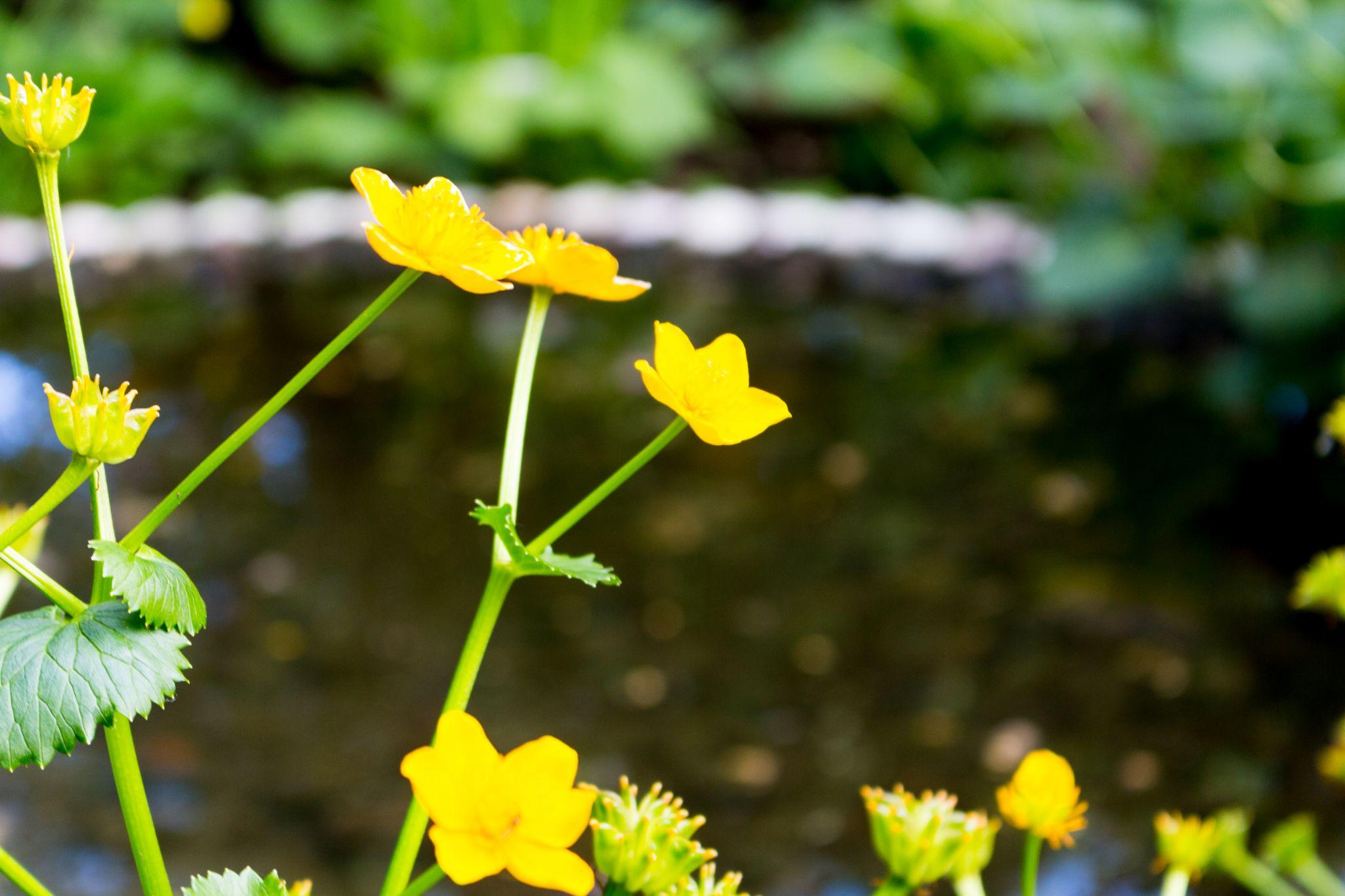 flower 6 by Sigurdur Arni Dagbjartsson
