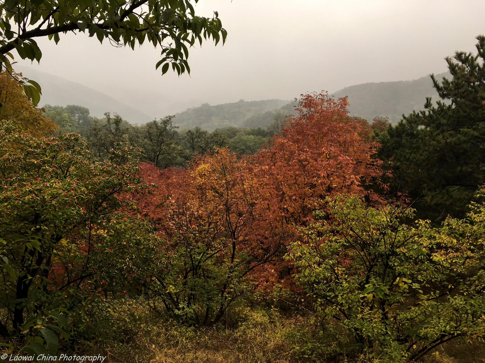 Autumn View by Arie Boevé